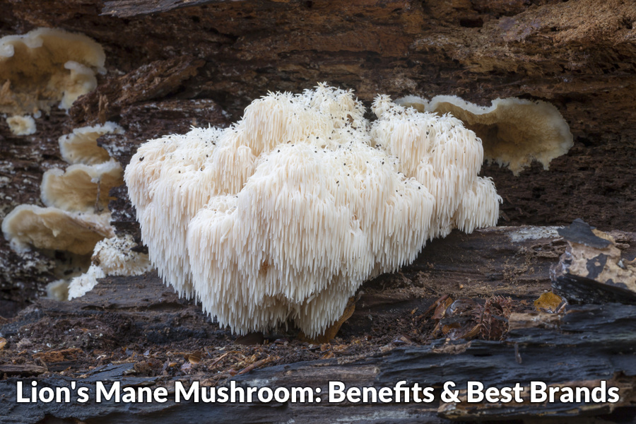 Lion's mane mushroom benefits & best brands