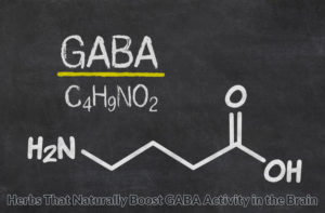 Herbs that naturally boost GABA activity in the brain