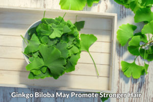Ginkgo biloba for stronger hair